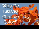 Why Do Leaves Change Color What Makes the Leaves Fall FreeSchool