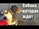 ДО СЛЁЗ!Собачья любовь и верность😔😔😔