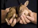 Милые и беззащитные детеныши животных