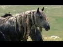 [BR] Welt der Tiere, Winnetous Pferde [DOKU]
