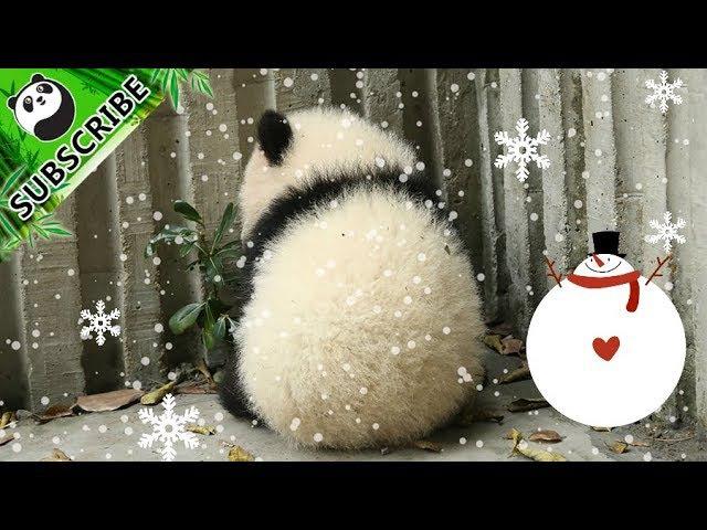 Panda Theme Pandas Around China Having A Blast In The Snow iPanda