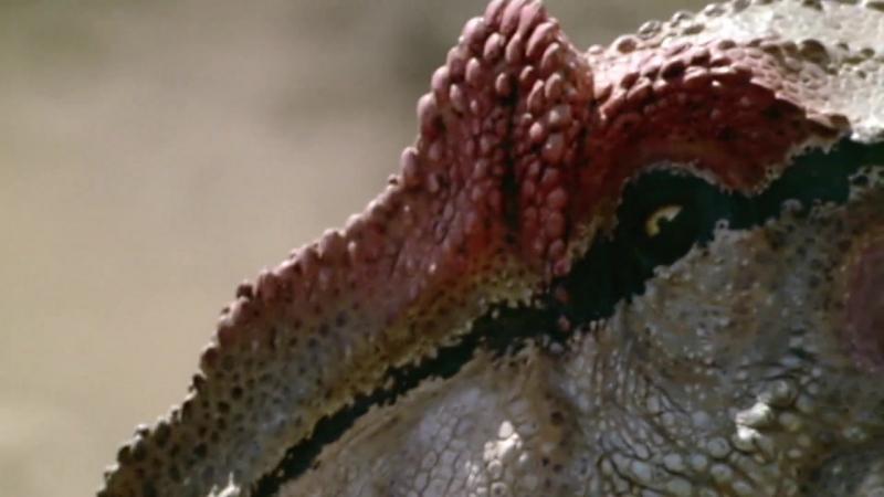 BBC Прогулки с Динозаврами - Баллада об Большом Ал - (BBC Walking with Dinosaurs The Ballad of Big Al)(2000)