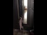 Коты и странные танцы