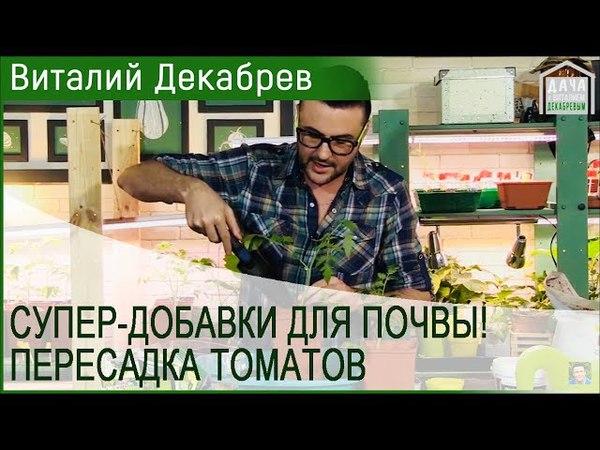 СУПЕР-ДОБАВКИ ДЛЯ ПОЧВЫ! Как приготовить СУПЕР-ГРУНТ для пересадки томатов