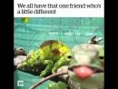 Я и мой друг дебил