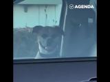 Пес улыбается в ответ