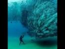 В глубоком синем море