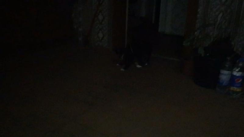 Ишшо котик