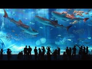Океанариум Vinpearl Amusement Park на о. Фукуок