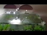 Scaper's Tank