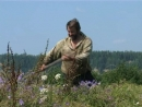 Счастливые люди - Жизнь в тайге - ЛЕТО