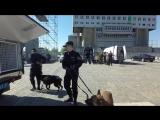 Учения ФСБ на фанзоне в Калининграде | Здесь был Кант | vk.com/kanthaus