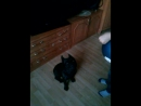 мой любимый пес рики и племянница катя