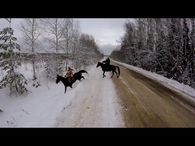 ЛОШАДИ ГАЛОП КСК ИГНАТОВСКИЙ RUSSIAN HORSE GALLOPING WITH GOPRO