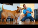 Faking My Death In Front of My Dog - Funny Dog Reacts