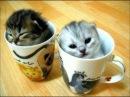 Забавные и милые котята и кошки Самое тёплое и пушистое видео