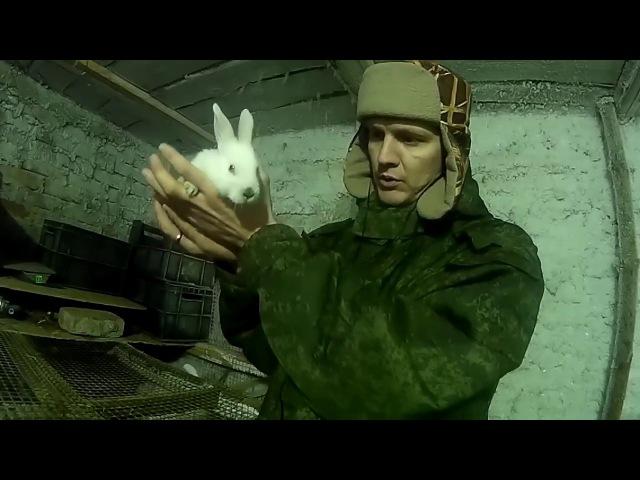 Отсадка 2 месячных крольчат Пересаживаем крольчат от крольчихи Семья в деревн...