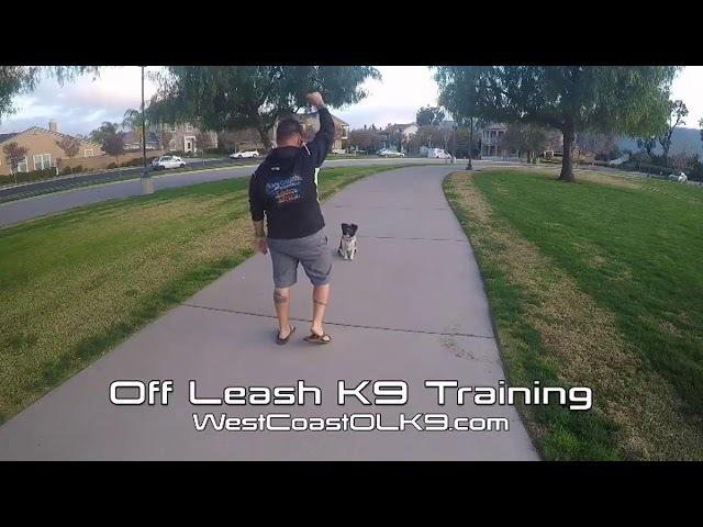 IG olk9wc Off Leash K9 Training Riverside County(тренировка Mav)