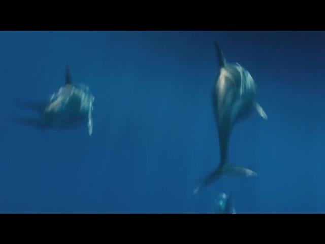 Oxygene-TheOcean.Оченькрасивыйклип