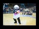 Черно-белые танцы панды – в рубрике «Баскетбольные и смешные»