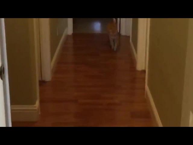 Мастер-класс по ужасам для кота