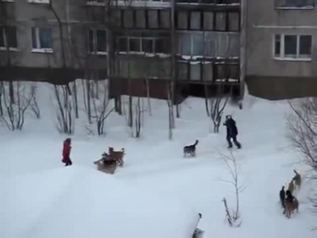 Ведьмак 3 Дикие Собаки