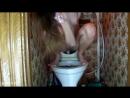Олеся дрочит в туалете