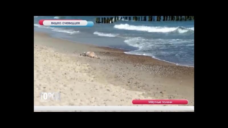 Мертвые тюлени_25_05