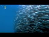 Планета хищников Большая белая акула (Документальный, природа, животные, 2006)