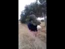 верхом на страусе