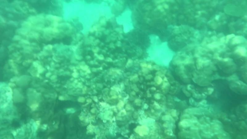 Снорклинг на острове Майтон