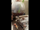 Антипаразитарная чистка-хорошее вино+специи+травяной чай