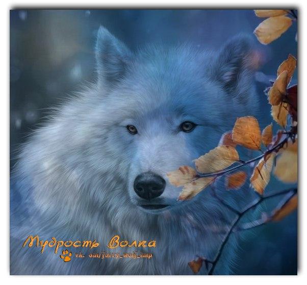 Фото №456242138 со страницы Марины Салашной