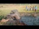 Спасение маленького слоненка ковшом экскаватора попало на видео