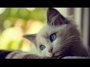 Что чувствуют кошки когда их обижают