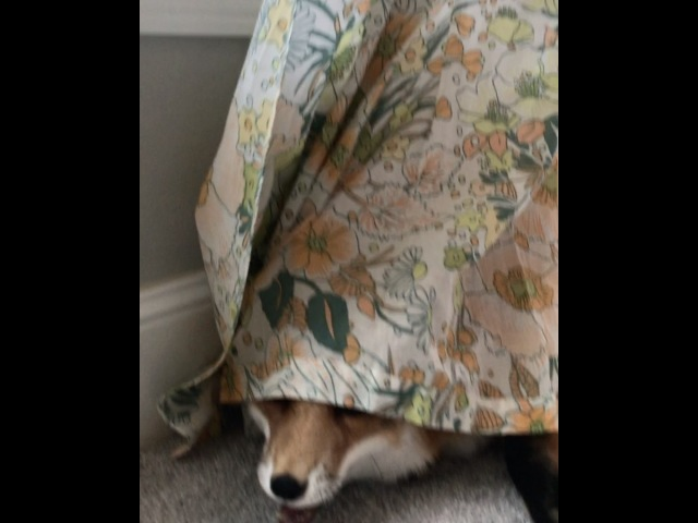 J U N I P E R F I G в Instagram: «Trying to hide from my responsibilities like..»