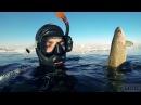 Подводная охота ХАРИУС НАЛИМ февраль 2016