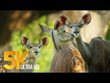 5K African Wildlife Documentary Film - Mana Pools National Park, Zimbabwe, Africa - 1 HR