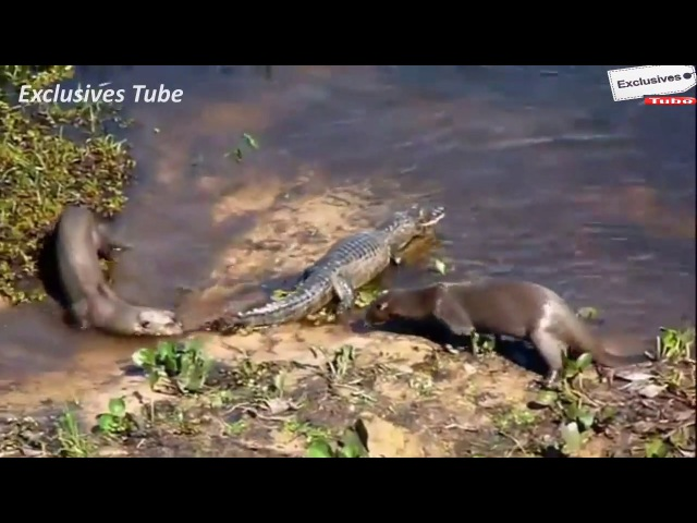 World of Animal Planet Craziest TOP 10 ANIMAL Attack