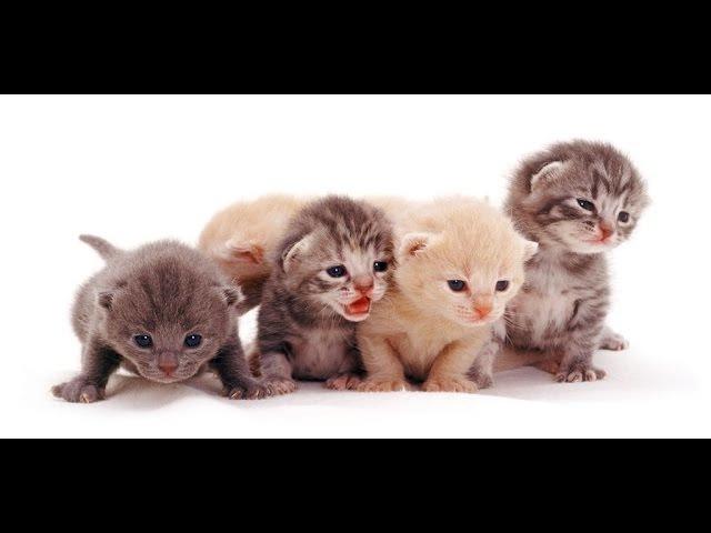 Смешные кошки. Хит парад 2013. Часть 2. Новые классные веселые моменты.