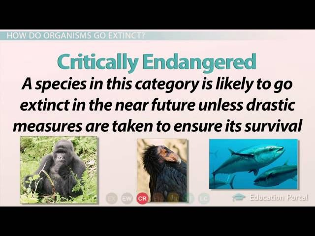 Differences Between Endangered Species and Threatened Species
