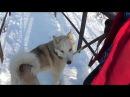 21 января 2018г морозно и ветрено утки собака потеряшка