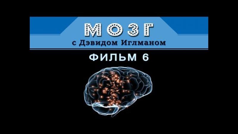 Мозг с Дэвидом Иглманом | Кем мы станем? | Фильм 6 || HD 720p » Freewka.com - Смотреть онлайн в хорощем качестве