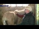 В Оренбурге молодую лошадь довели до изнеможения Скандал из за Фунтика