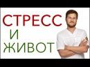 СТРЕСС И ЖИВОТ Предтеча Тимофей Кармацких