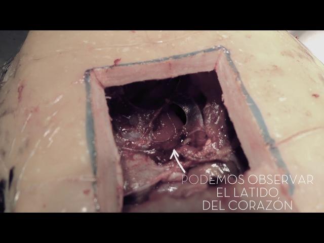 CAP 210 Esterilización en reptiles Castración de un galápago macho Especies invasoras