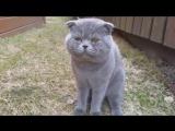 Кот ругается на хозяйку! УМОРА!