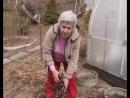 МАЙ Как выращивать пионы АКТУАЛЬНО