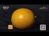 Кумкват ''ЦзиньГань'' (золотой мандарин-апельсин), либо ''Ми ЦзиньГань'' (медовый мандарин). Данное растение также называют: фор