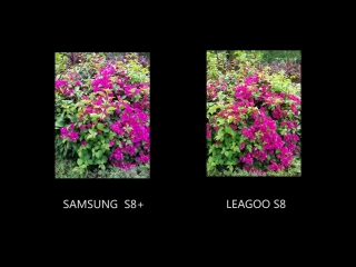 Camera Test: LEAGOO S8 and Samsung S8 Plus